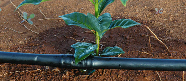 Irriagação Localizada - principais tipos de irrigação