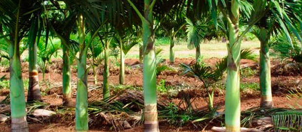 Irrigação eleva investimento inicial