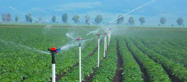 Jain Irrigation vence concorrência de Micro irrigação