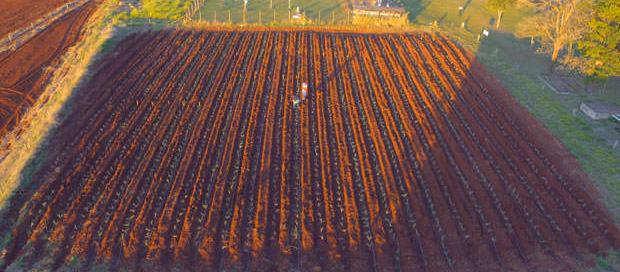 Irrigação no pegamento de mudas pré brotadas